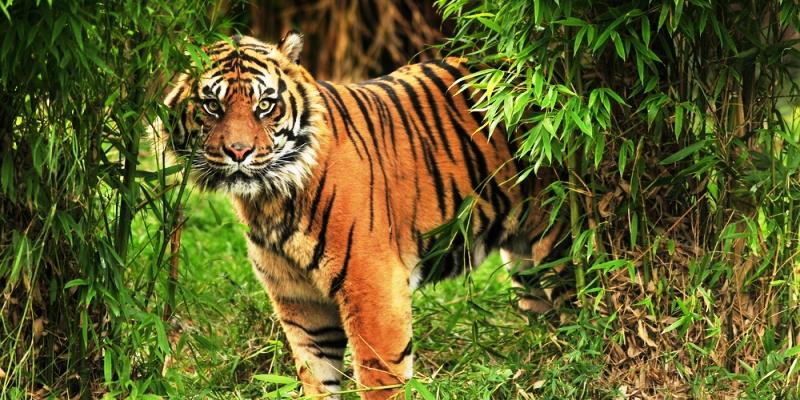 sunderbans tiger tour